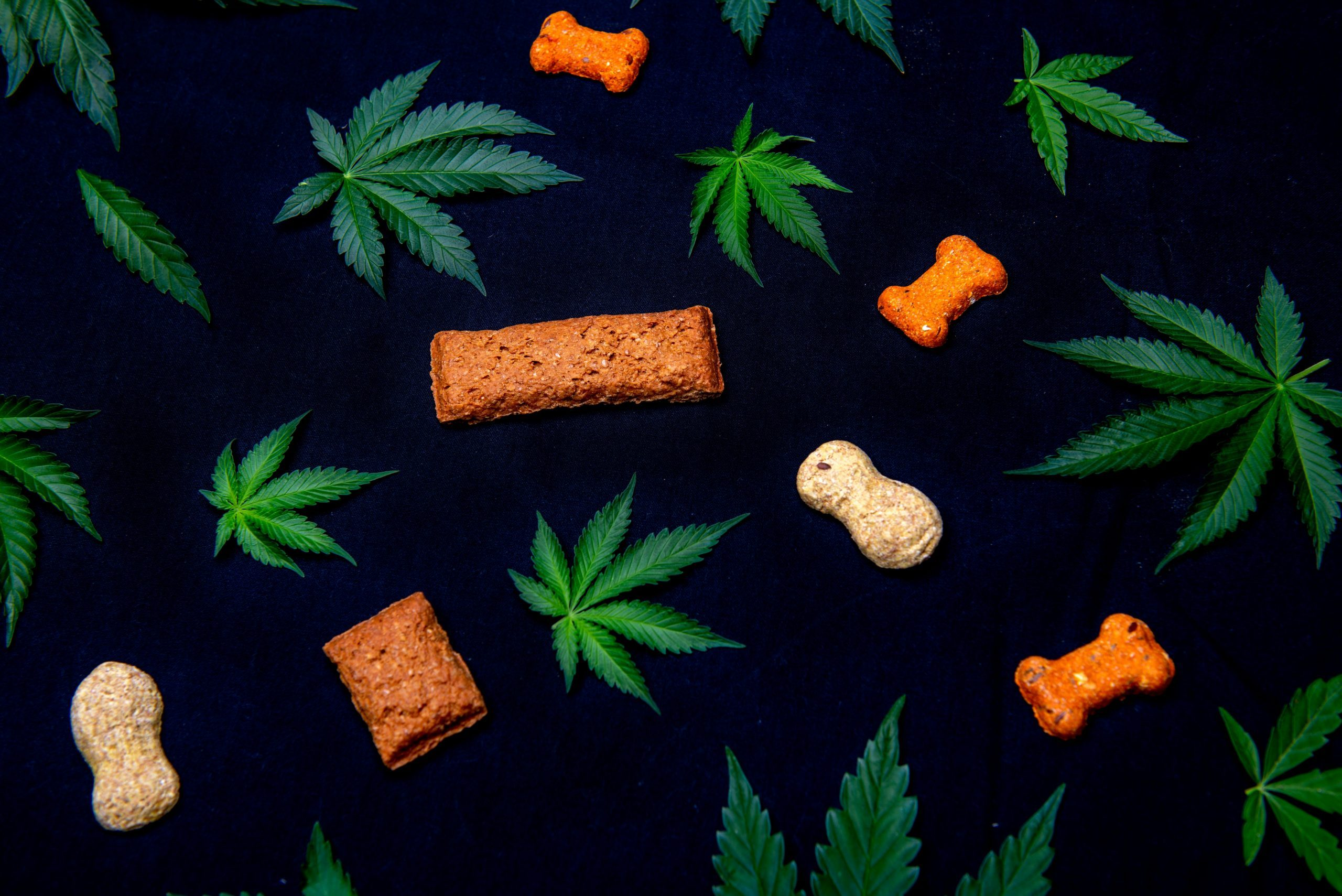 dog treats cannabis CBD