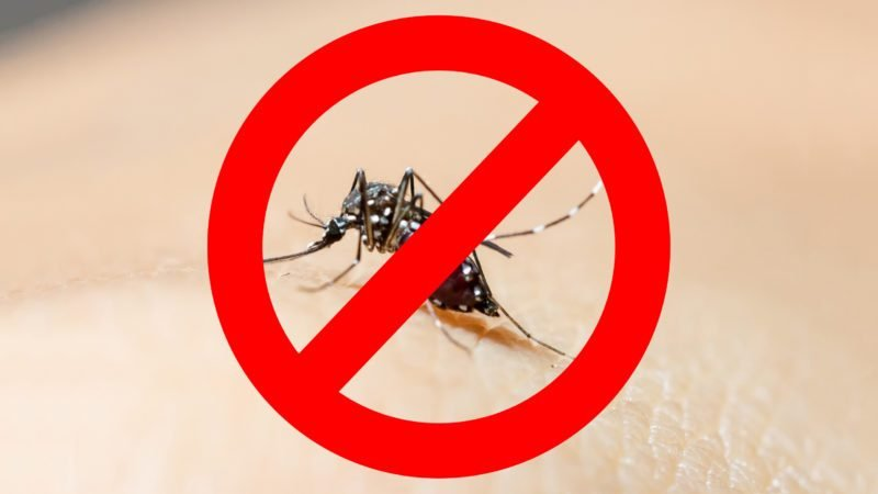 no mosquitoes