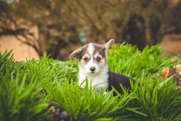 Puppy in the Grass