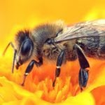 How We Can Help Honeybees Every Day