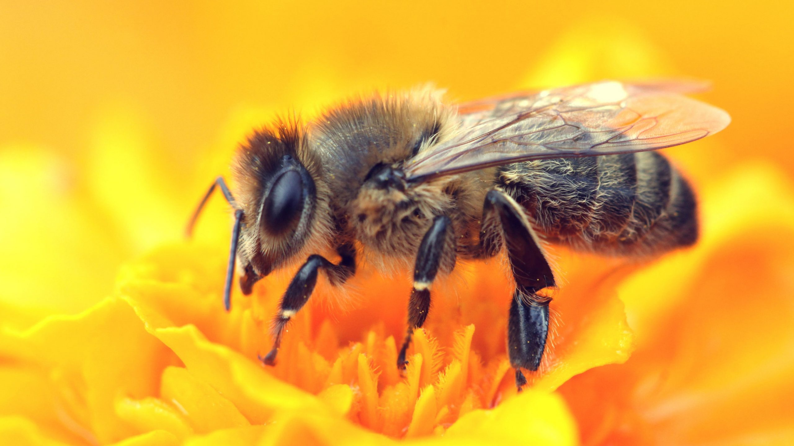How We Can Help Honeybees Every Day | Reader's Digest