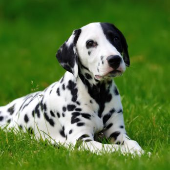 50 Unique Dog Names for Your Pup