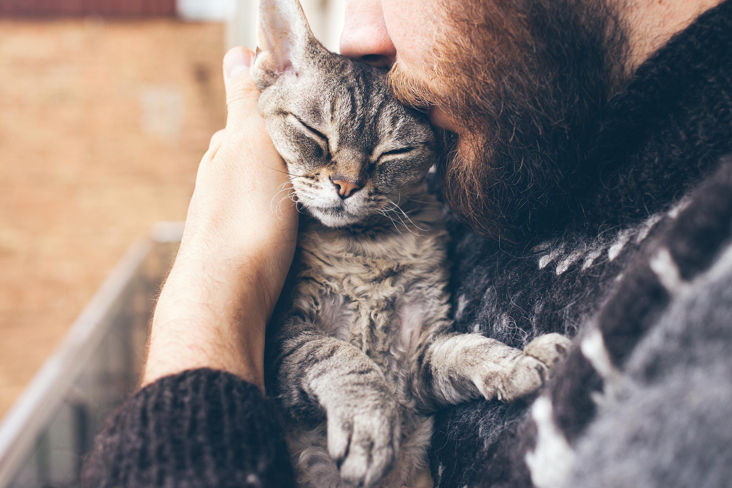 cat pet kiss