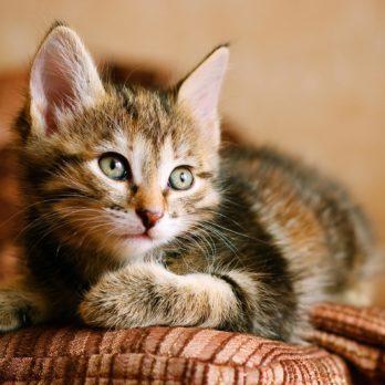 50 Best Cat Names for Your New Kitten