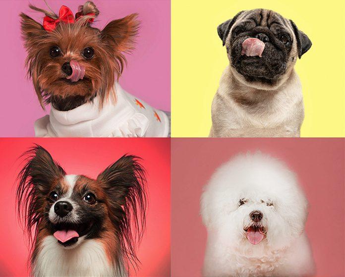 various small dog breeds