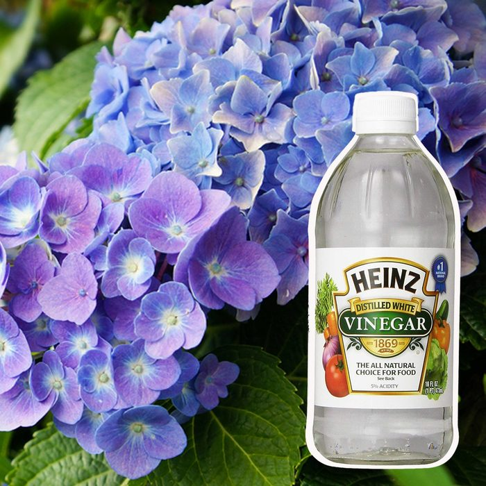 vinegar-and-lilacs