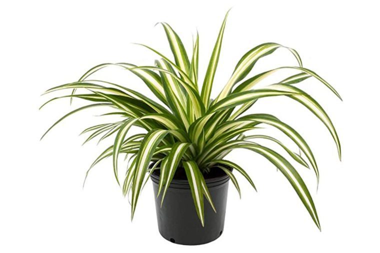 Low-Light Houseplants That Thrive in Near Darkness ... on low light plants, low light shrubs, low light succulents, low light vines, low maintenance indoor plants, low light weeds, low light flowers outdoors, low light garden, low light bromeliads, low palm bushes, low light health, low light tropicals, low maintenance shade plants, low light trees, low light bonsai, low light cactus, low light roses, low light landscaping, low light orchids, low light palms,