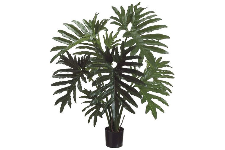 11_Philodendron-plant