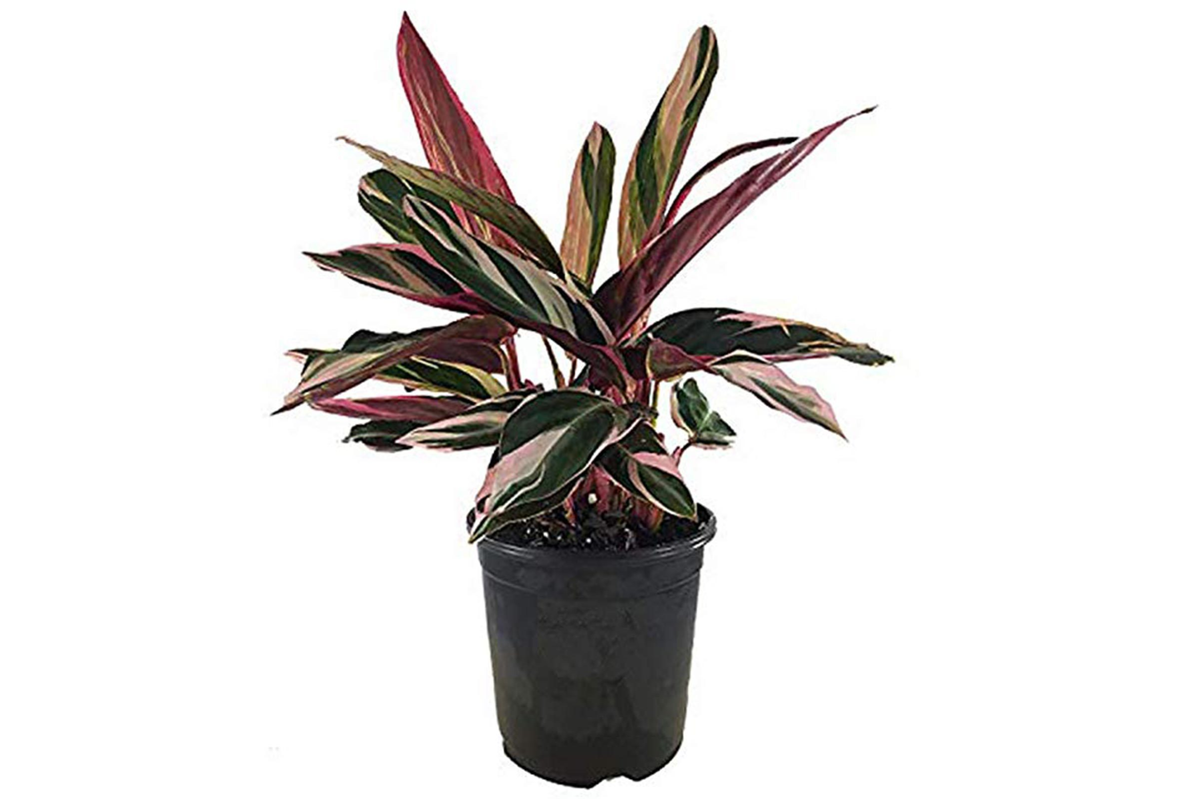 Low-Light Houseplants That Thrive in Near Darkness ... on