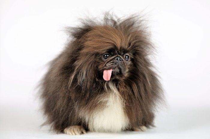 ugly dog wild thang