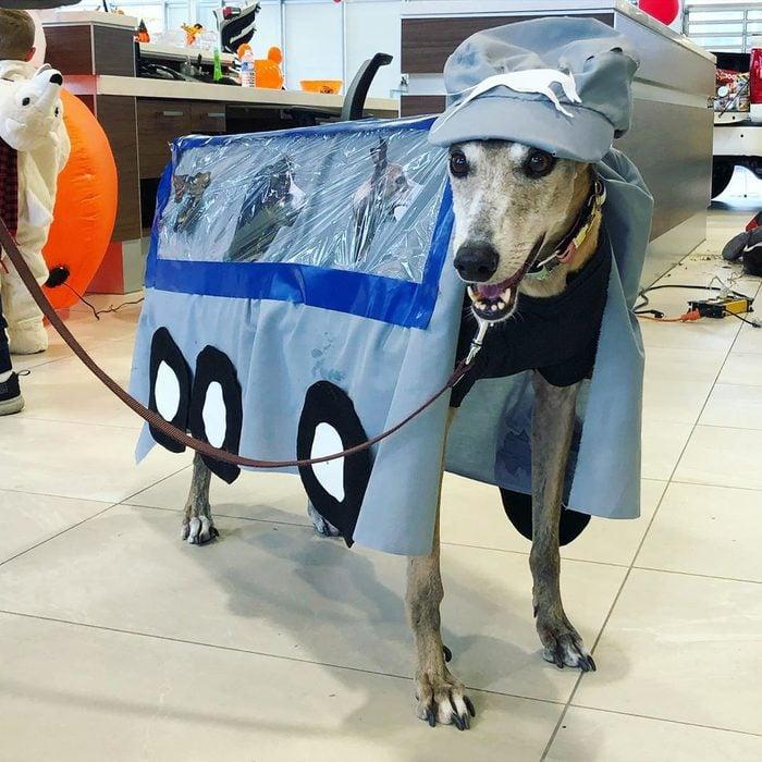 greyhoynd bus costume