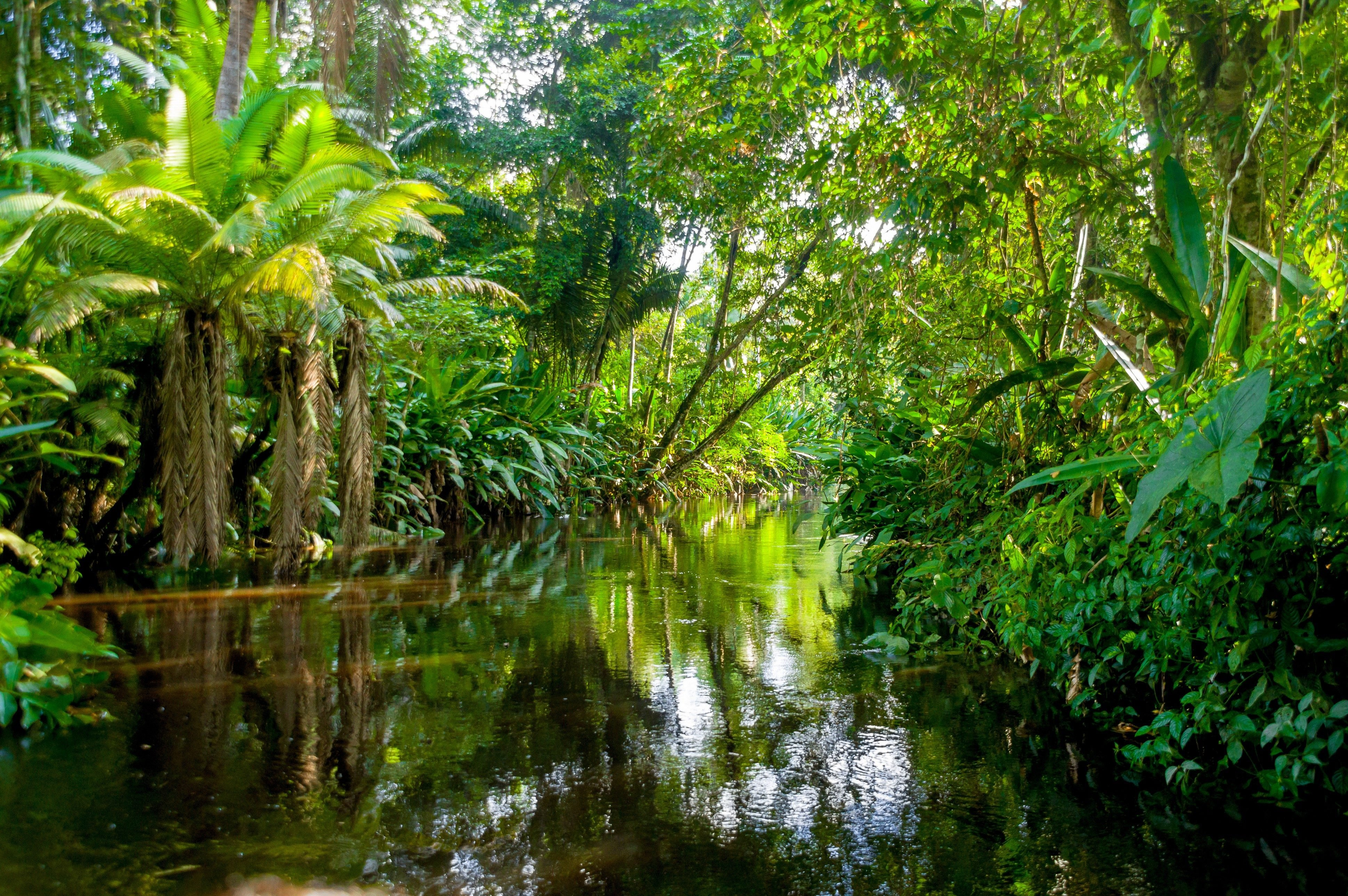 Image result for Amazon Rainforest  forest