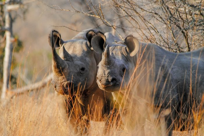 Black rhinos somewhere in africa