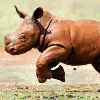 33 Stunning Photos of Rhinos in the Wild