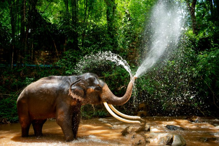 Elephants are spraying water
