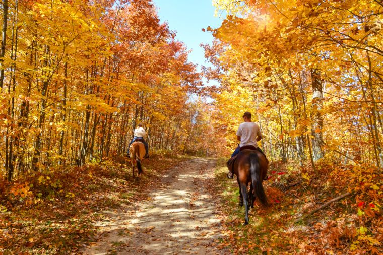 Gorgeous autumn fall day. Horseback riding through lush golden foliage. Horizontal landscape with people.