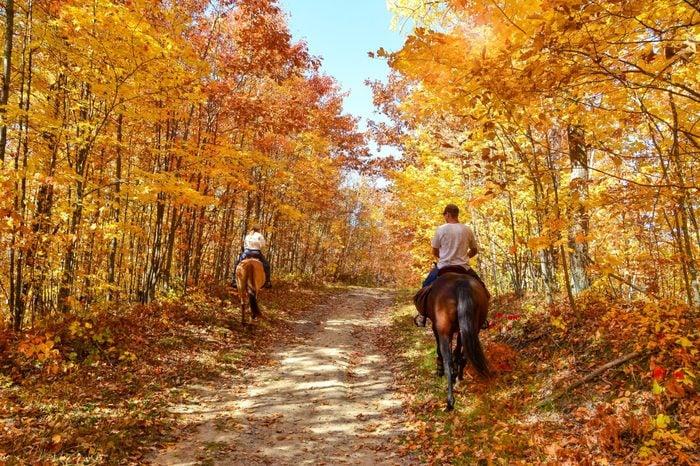Gorgeous autumn fall day. Horseback riding through lush golden foliage. Horizontal landscape with people.