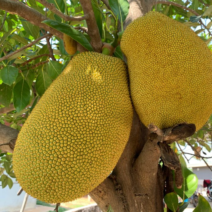 Jackfruit Is Everywhere Now—But What Exactly Is It?