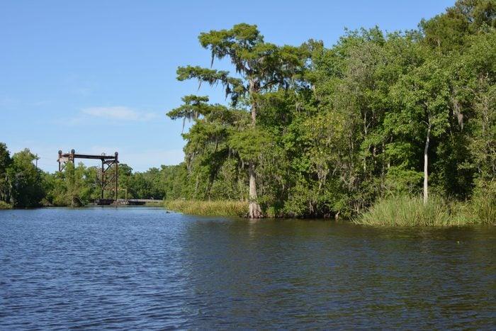 Out in the cypress swamp near Thibodaux, Louisiana.