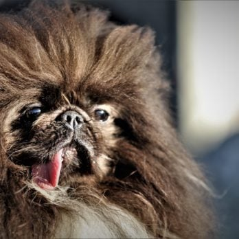 50 Ugly Dogs That Are Still So Darn Cute