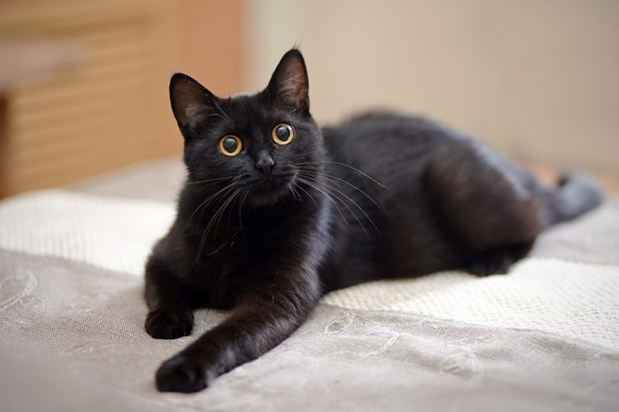 The black cat with yellow eyes lies on a sofa.