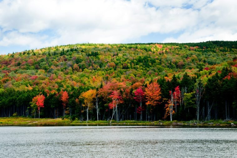 Trees are changing colors along Shaver's Lake in West Virginia.