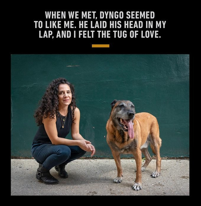 When we met, Dyngo seemed to like me. He laid his head in my lap, and I felt the tug of love.