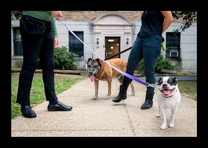 After months of retraining, Dyngo can now walk in the neighborhood without feeling that he's on duty.