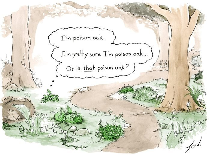 a bush in the woods wonders if he is poison oak or if THAT is poison oak