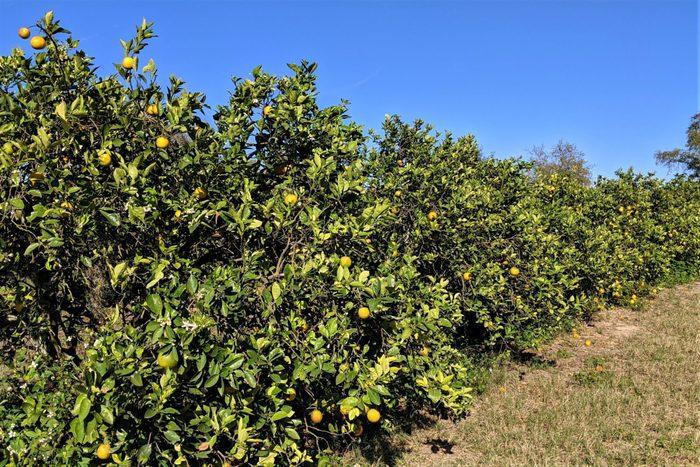 Valencia Grove Florida