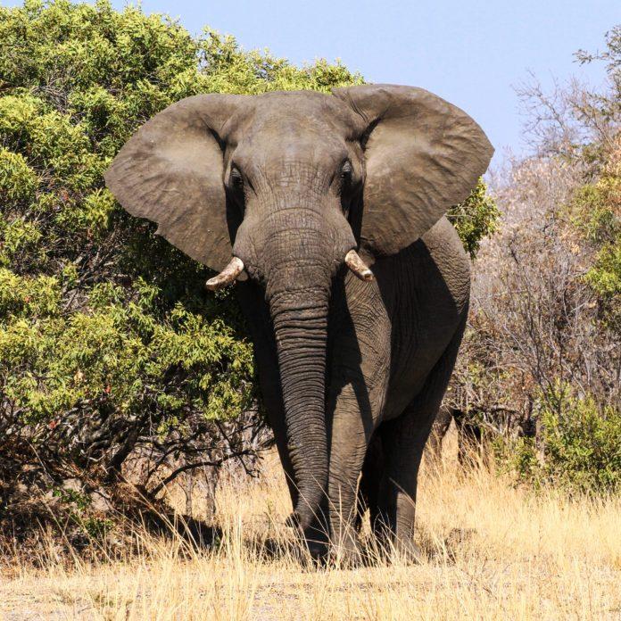 14 Stunning Photos of Elephants in the Wild