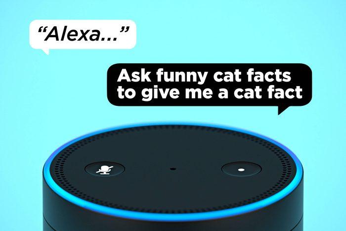 Alexa Ask Funny Cat Facts