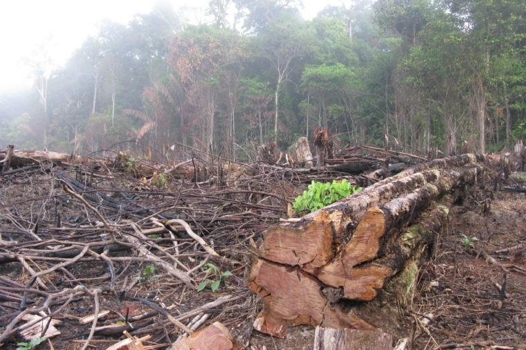 Destroyed tropical rainforest in Amazonia Brazil. Image taken on 20 January 2010