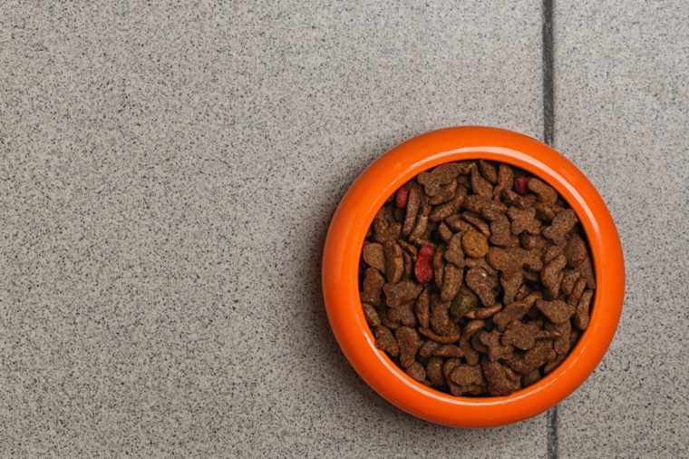 Bowl with food for cat or dog on floor. Pet care