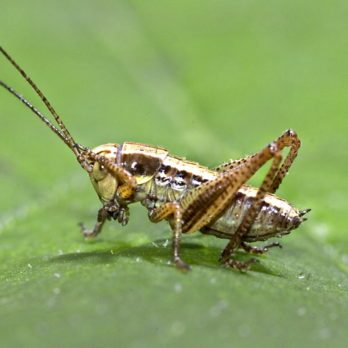Why Cicadas, Crickets, and Other Bugs Are So Loud