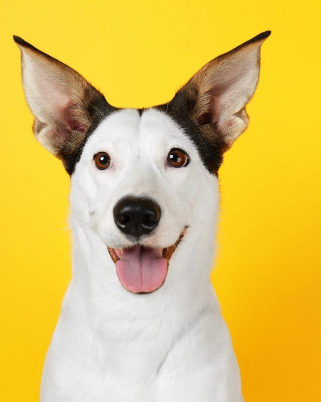 Dog Jokes: Funny Dog Jokes | Reader's Digest