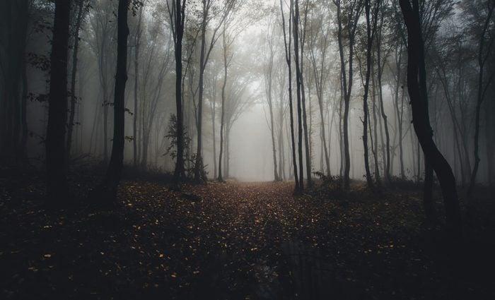 road through forest in autumn