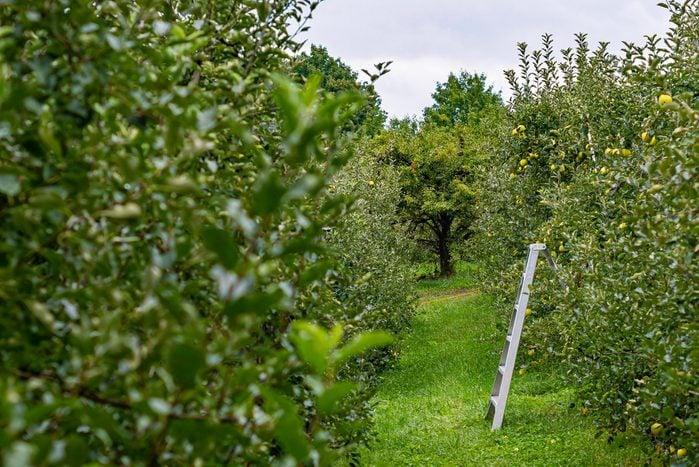 Honey Pot Hills Orchard