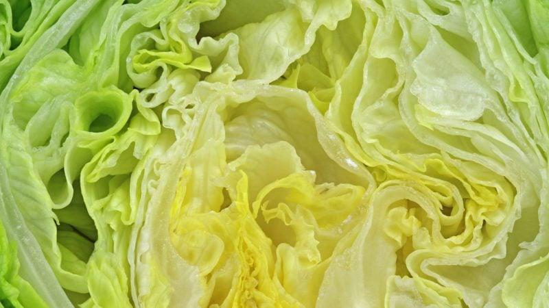 close up of sliced fresh iceberg salad lettuce texture