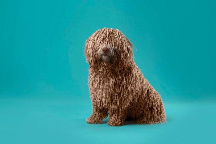 long hair deadlock dog
