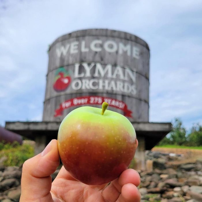 Lyman Orchards in CT