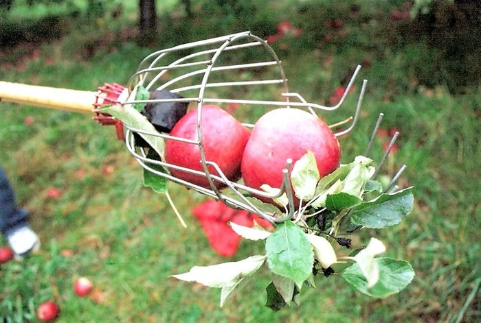 Maskers Orchard in Warwick New York