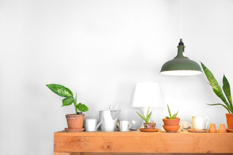 Table lamp and a small plant pot on wood cabinet