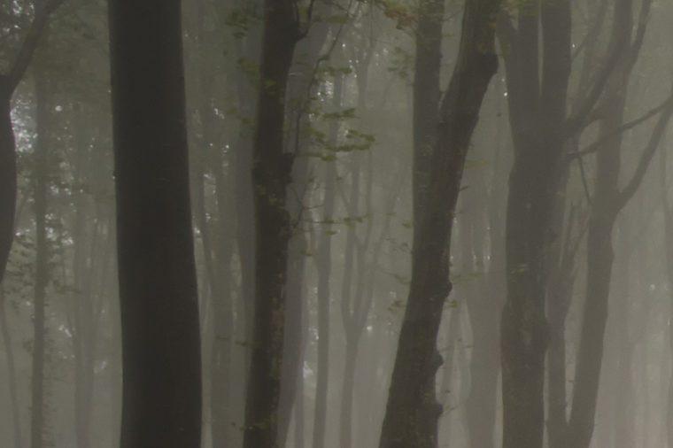 fog in a dark forest