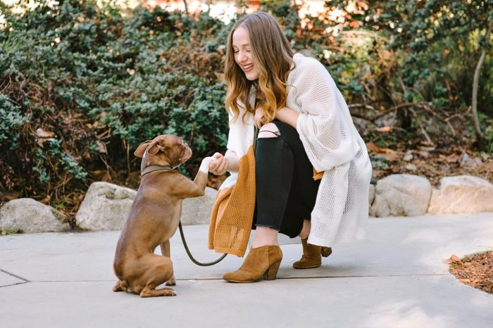 A pet Boston Terrier performs a handshake dog trick with young white female owner