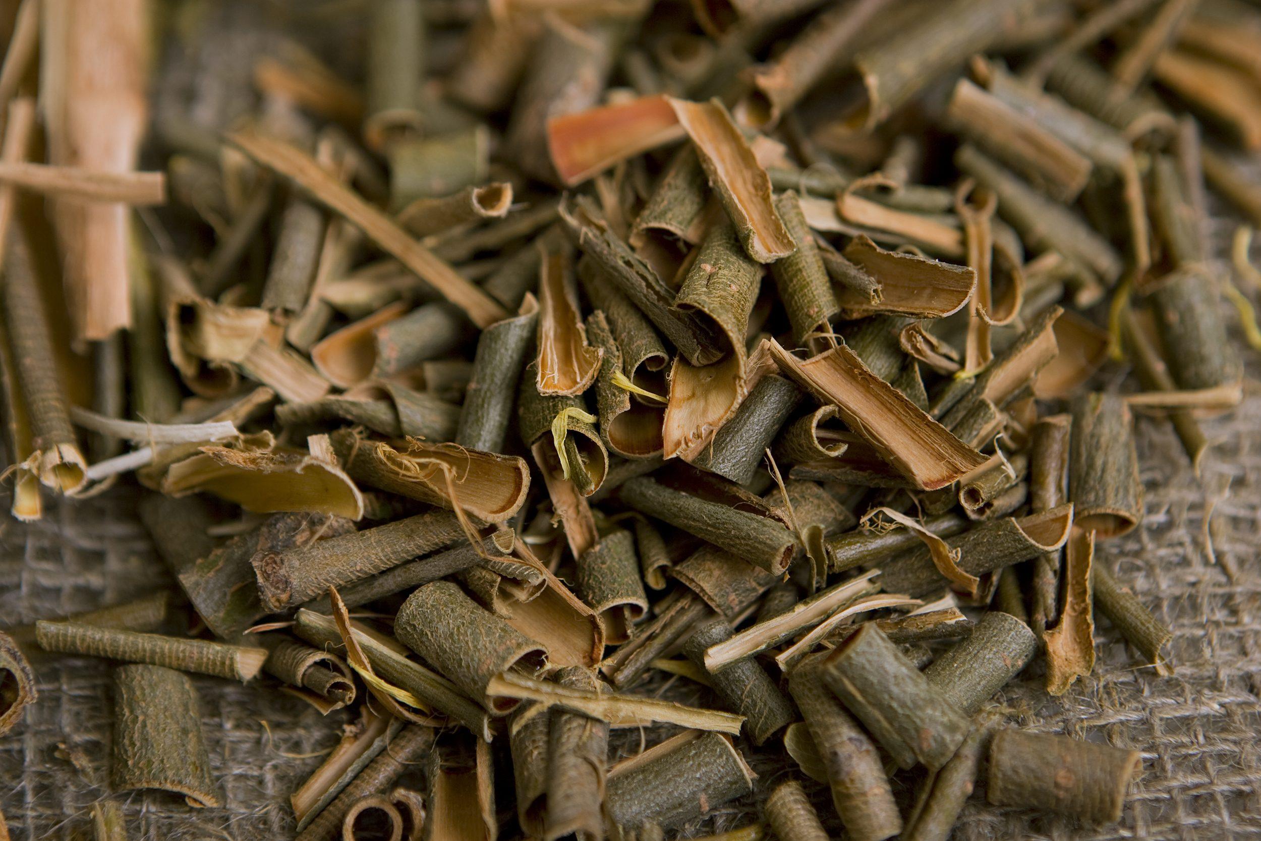 willow bark medical herb,