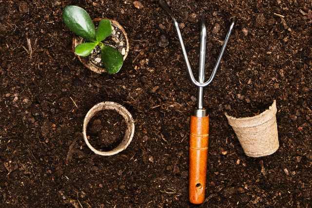 Planting a beautiful, green leaved plant on a natural, sandy background. Camera from above, top view. Natural background for advertisements.