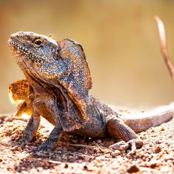 12 Things You Didn't Know Lizards Could Do