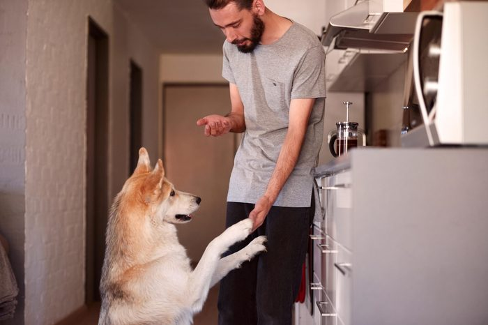 young hipster man bonding with his pet dog with tricks and treats, shake paw
