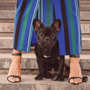 Black french bulldog puppy sitting on stairs between owner's female legs